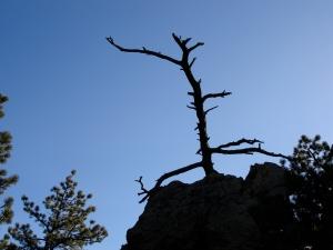 Tree on Sanitas